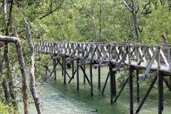 Bako_National_Park15