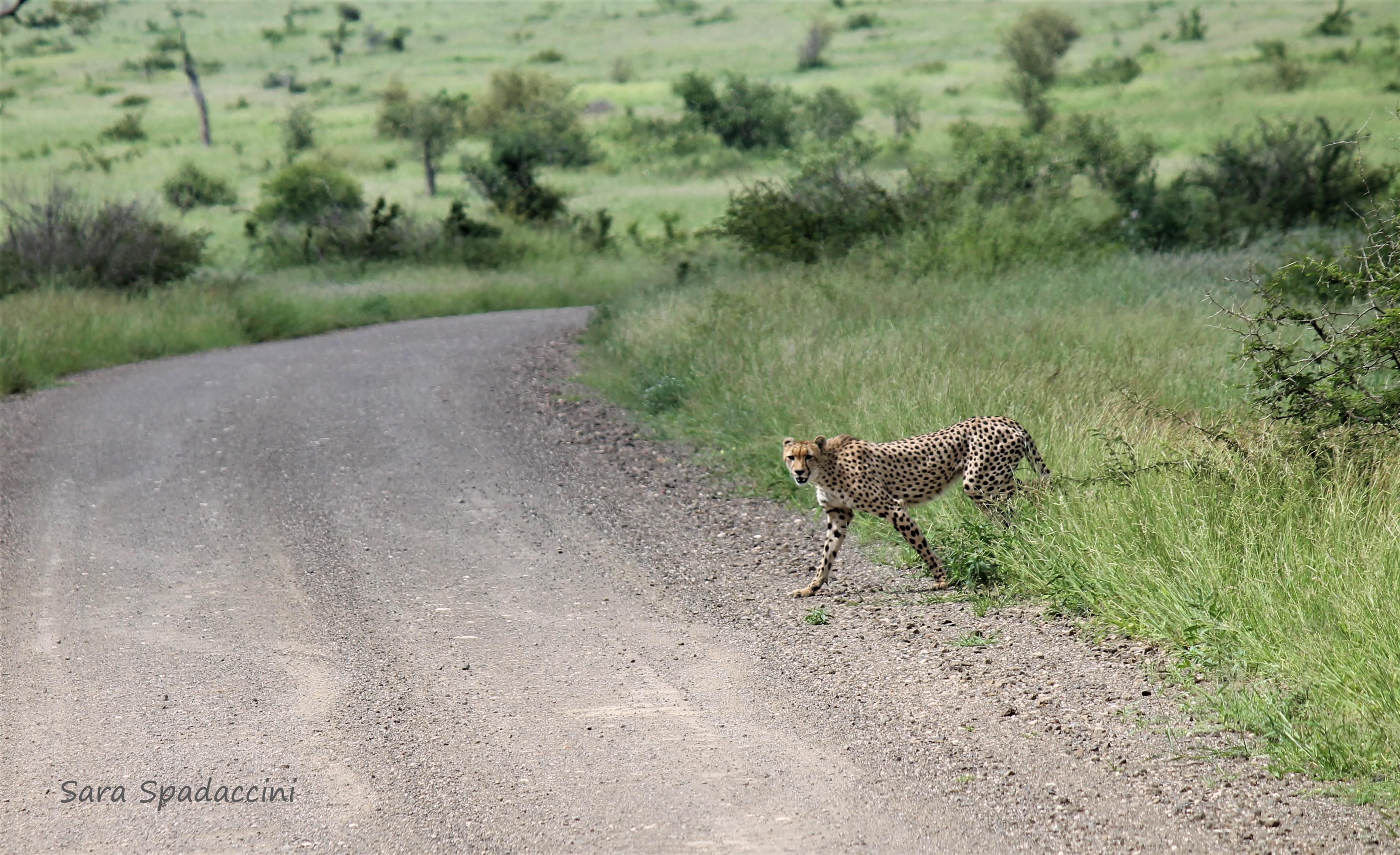 Kruger Park (12)
