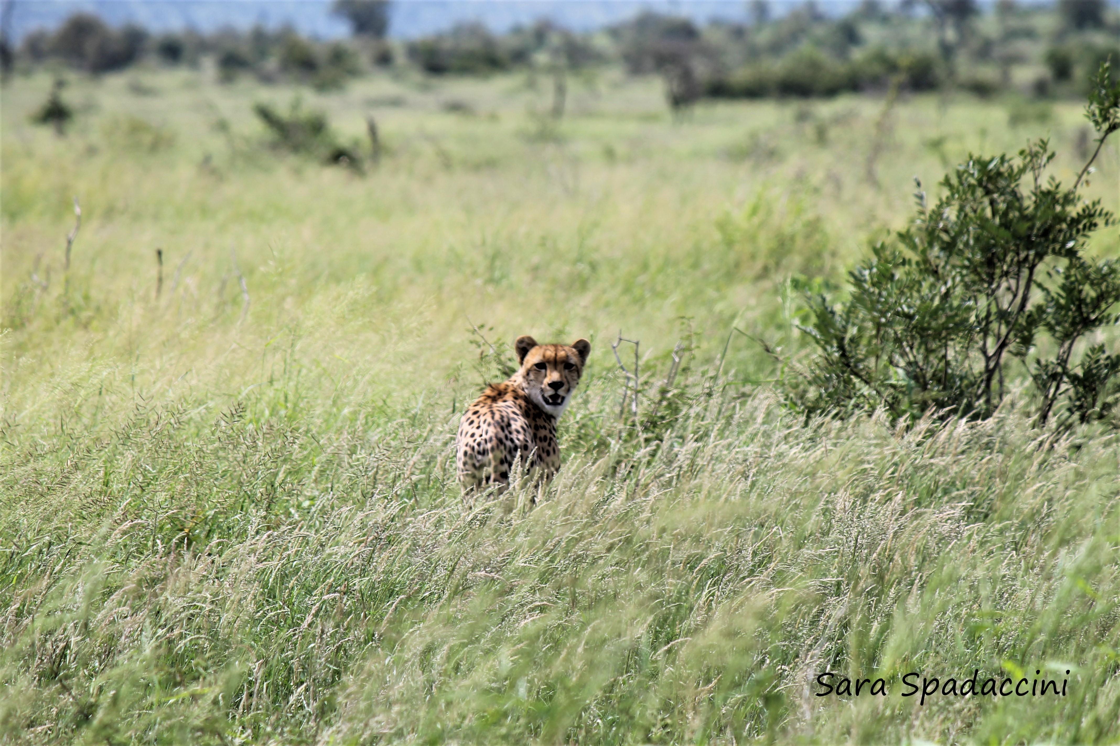 Kruger Park (13)