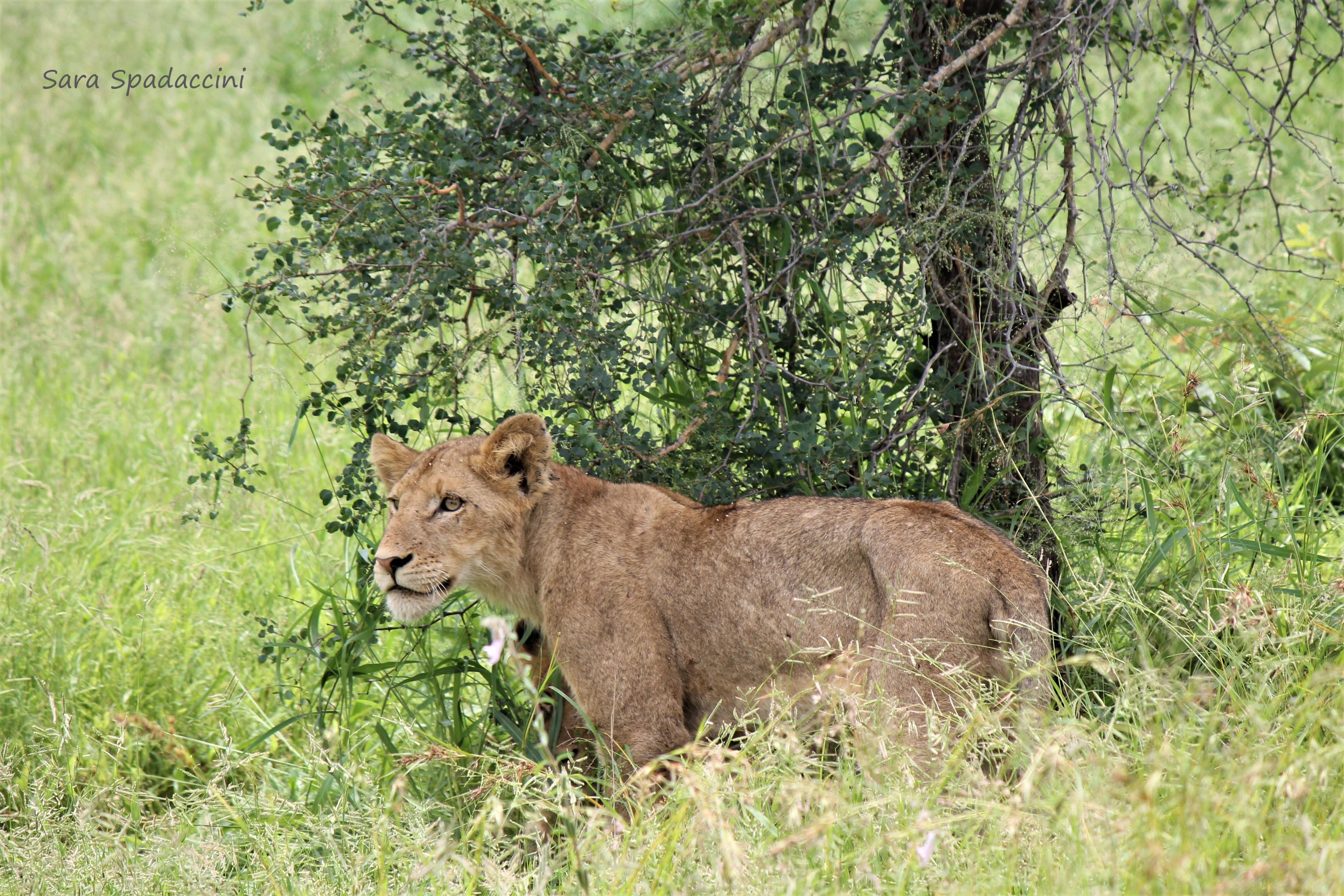 Kruger Park (17)