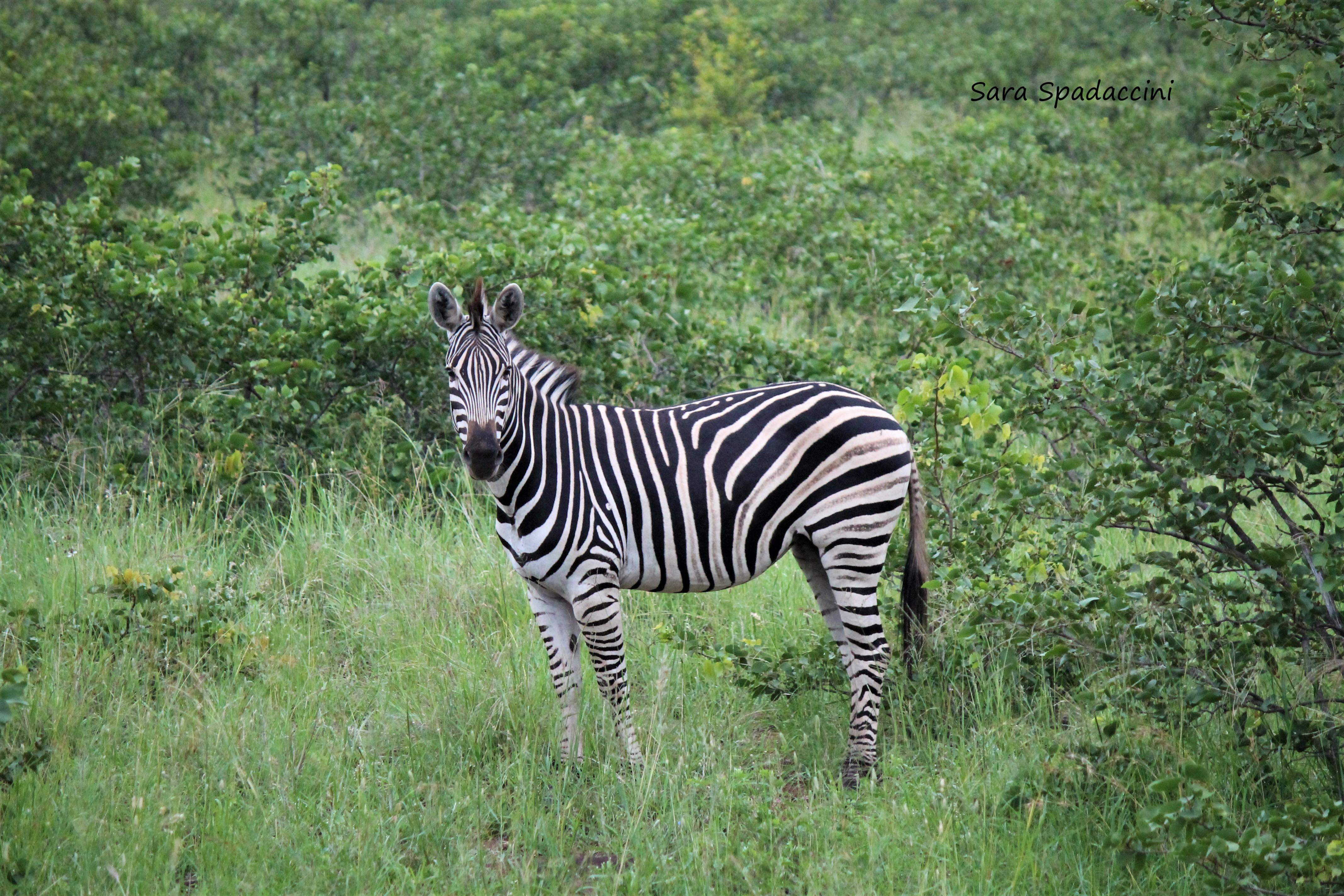 Kruger Park (2)