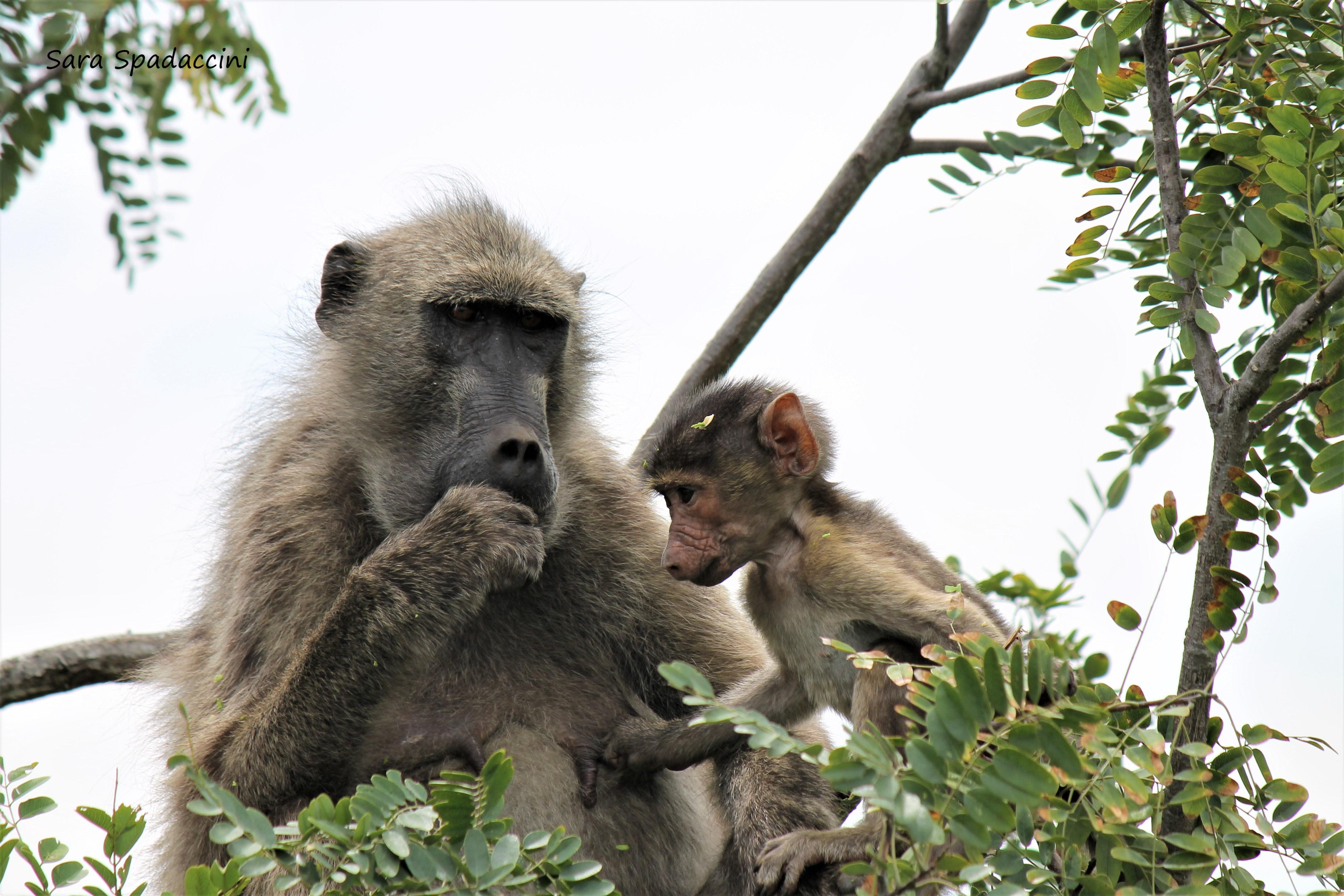 Kruger Park (21)