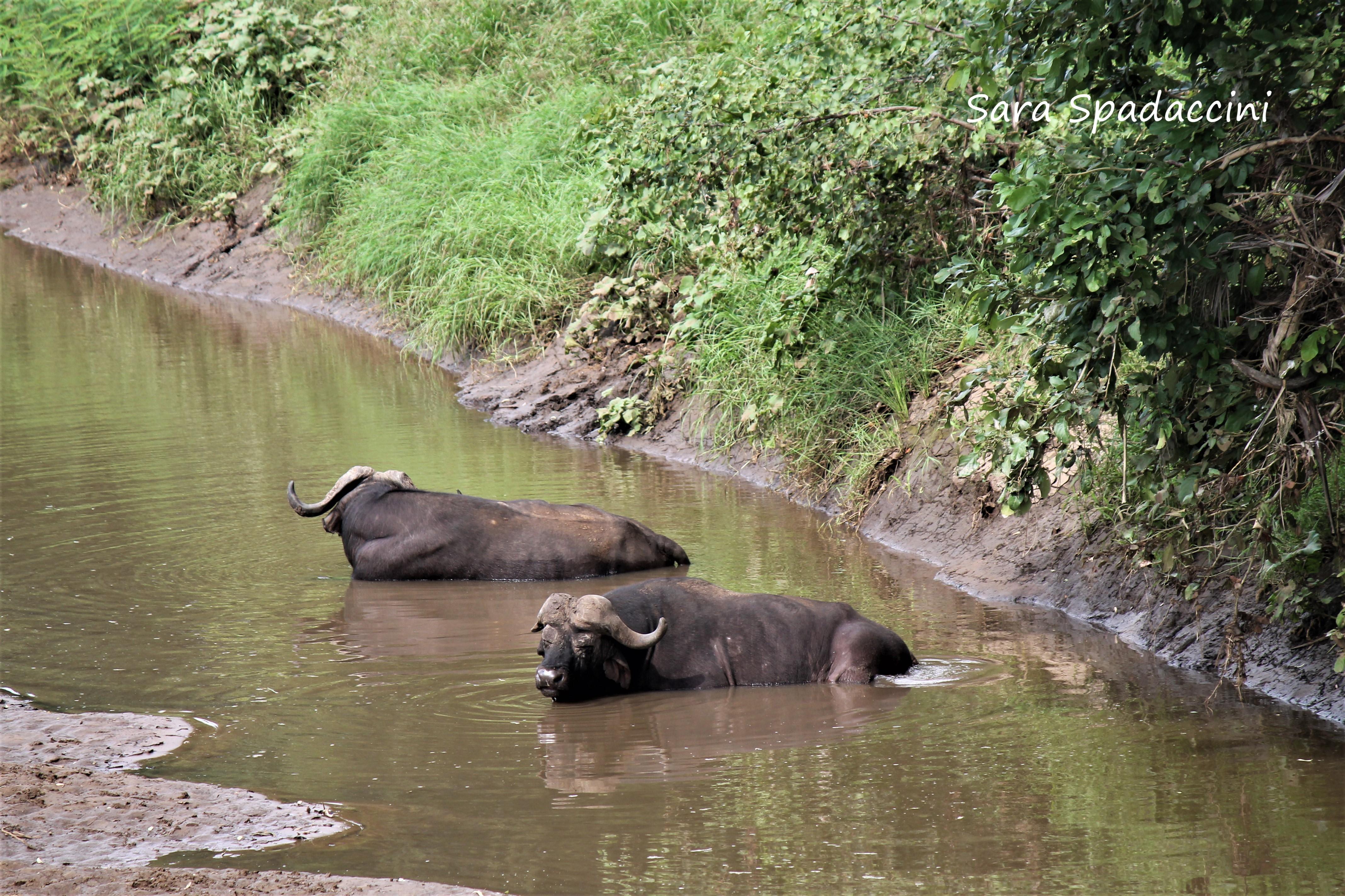 Kruger Park (23)