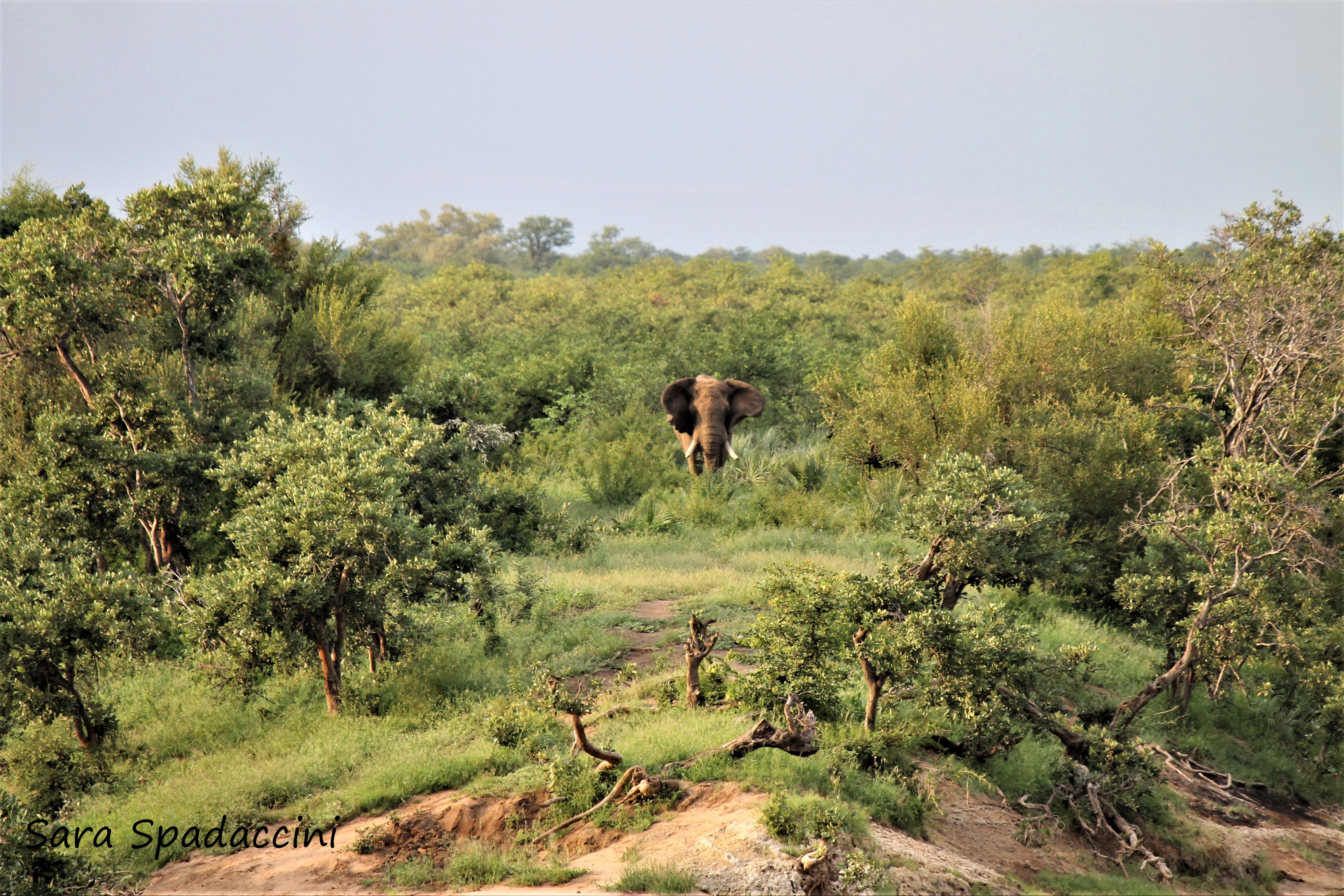 Kruger Park (24)