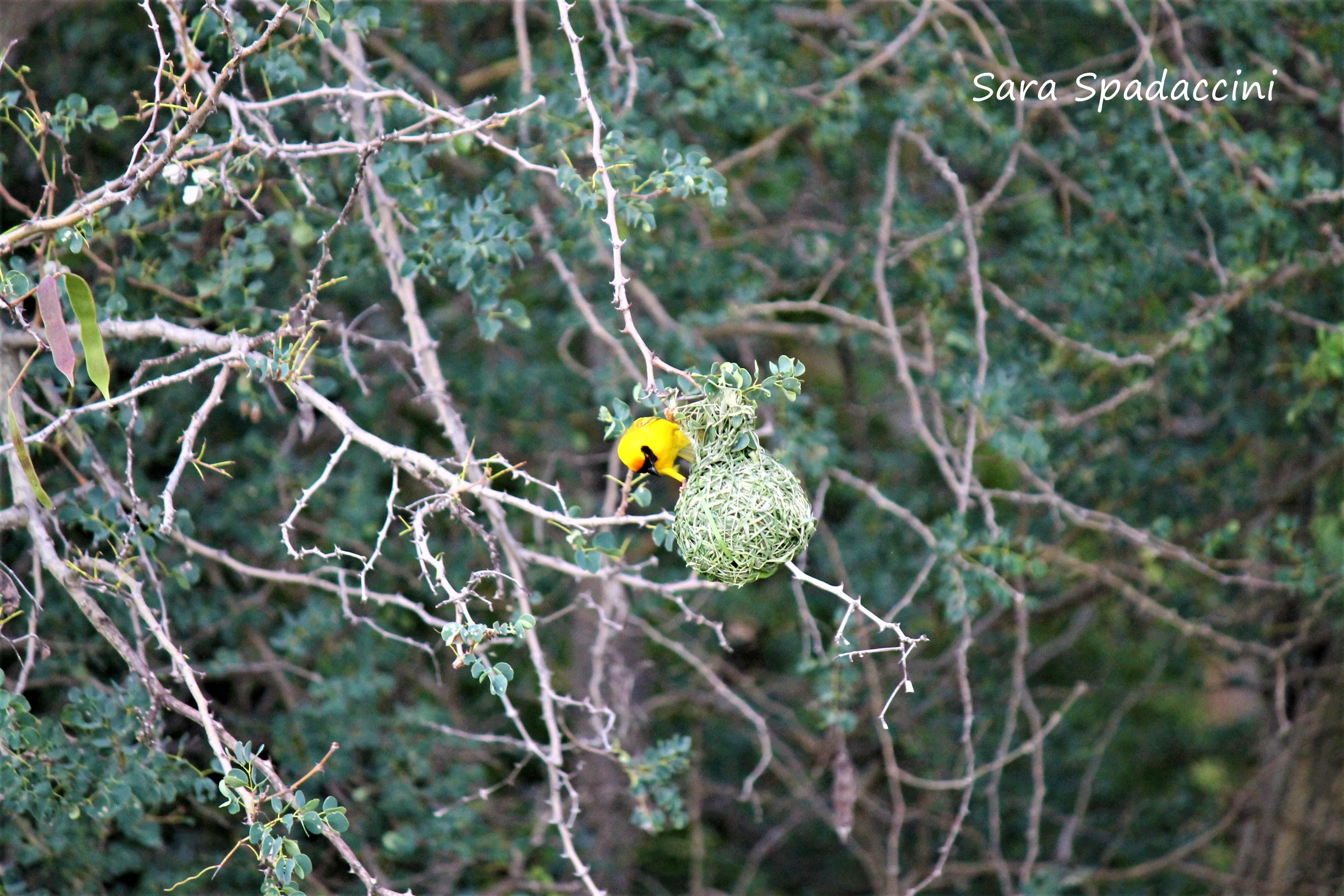 Kruger Park (26)