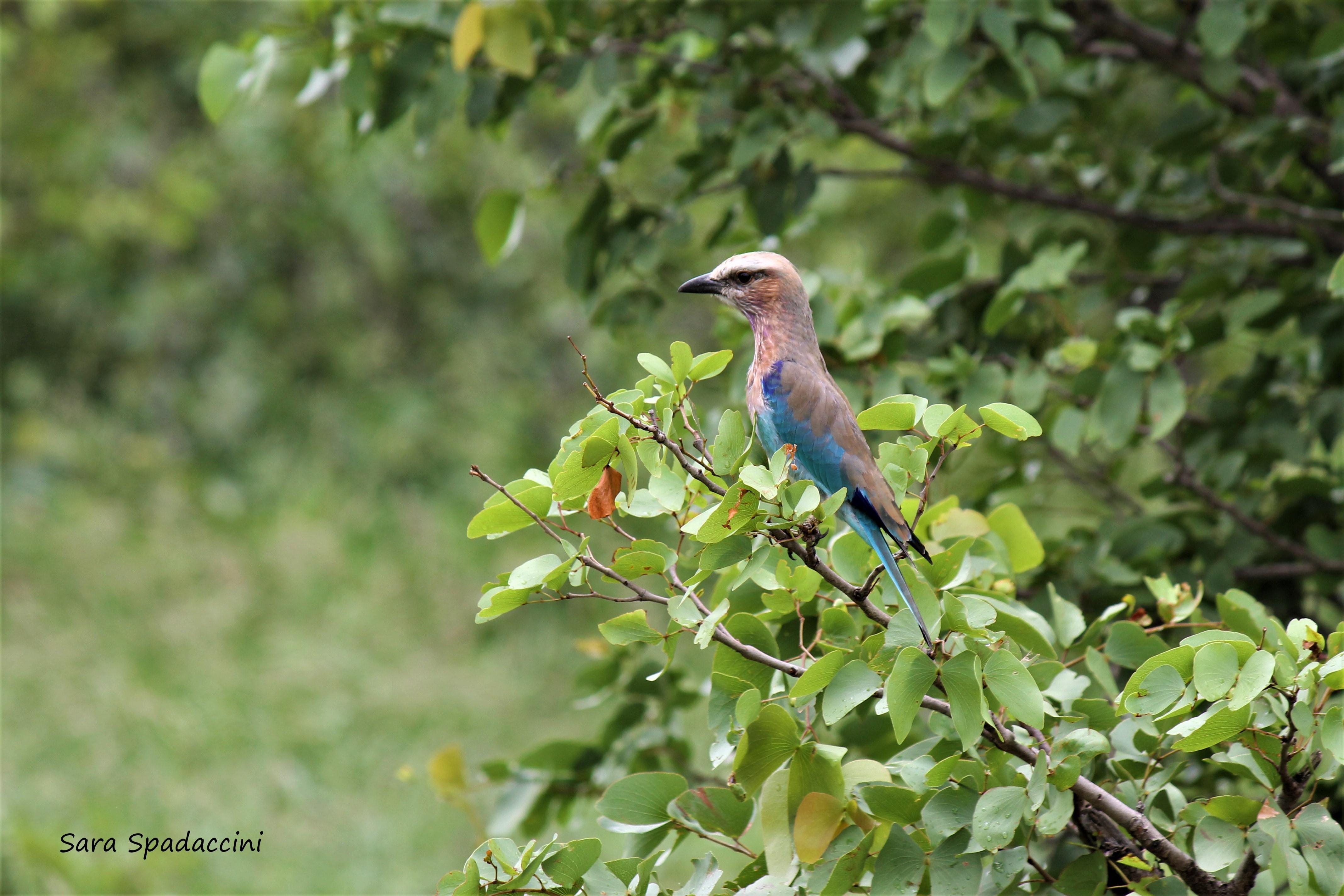 Kruger Park (29)