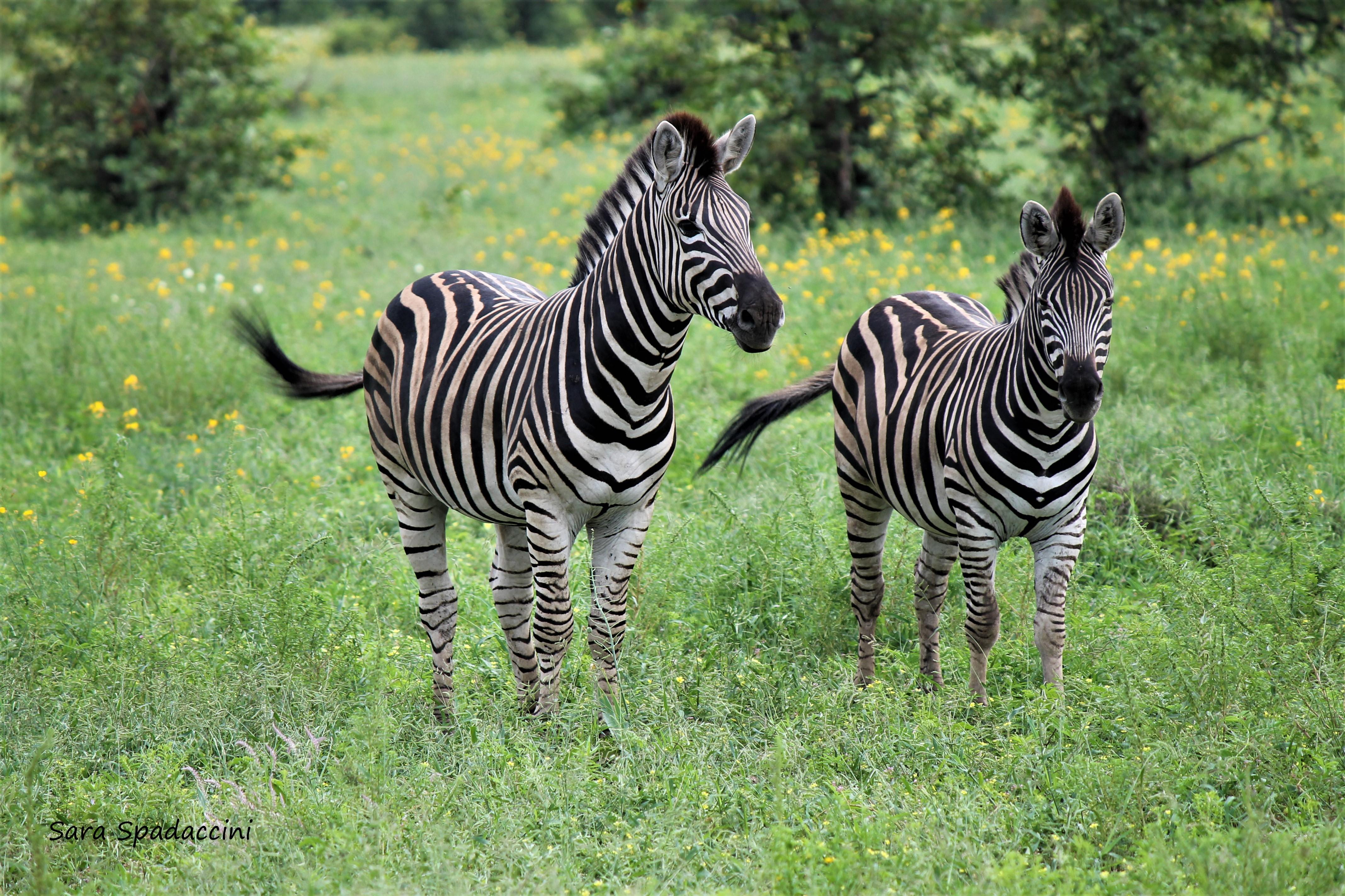 Kruger Park (30)