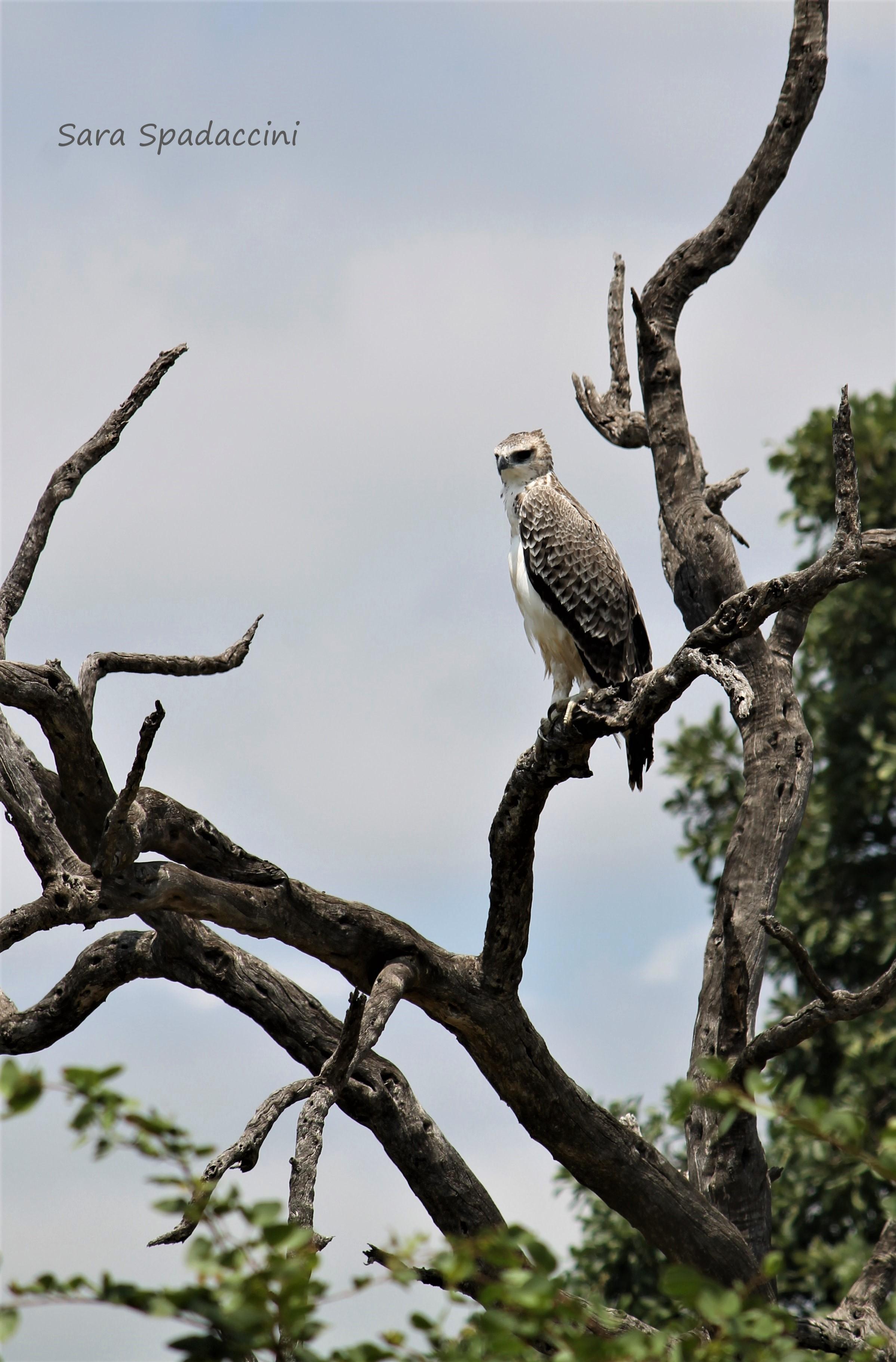 Kruger Park (33)