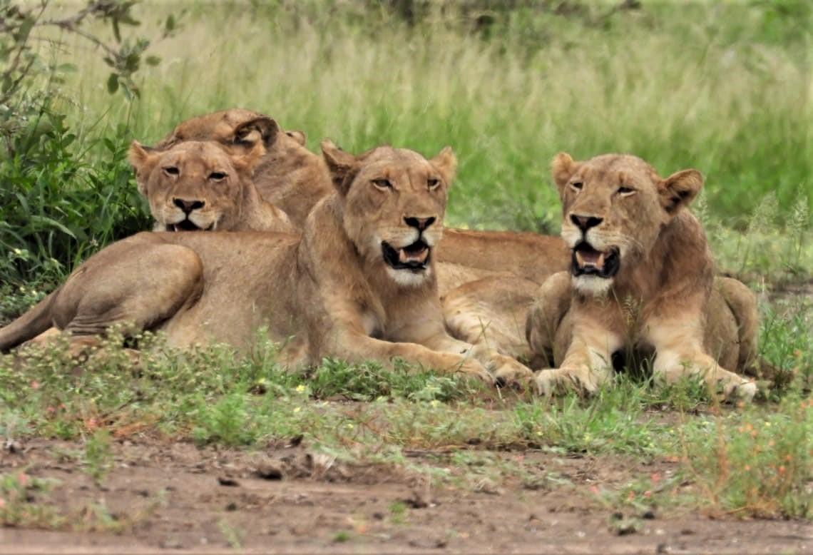 Kruger Park (35)