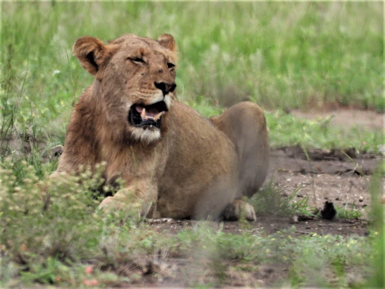 Kruger Park (36)