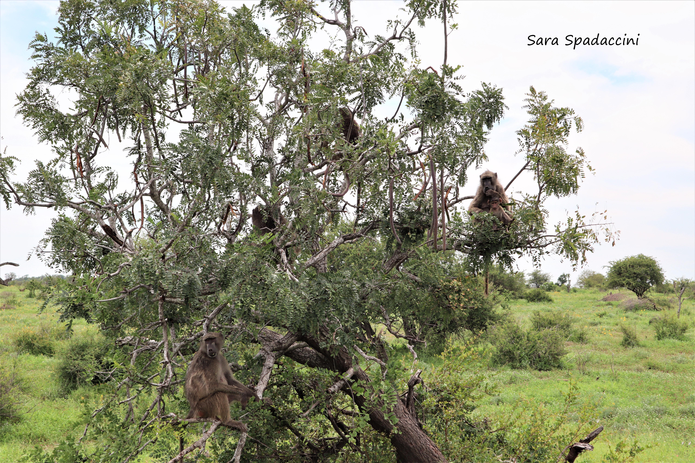 Kruger Park (38)