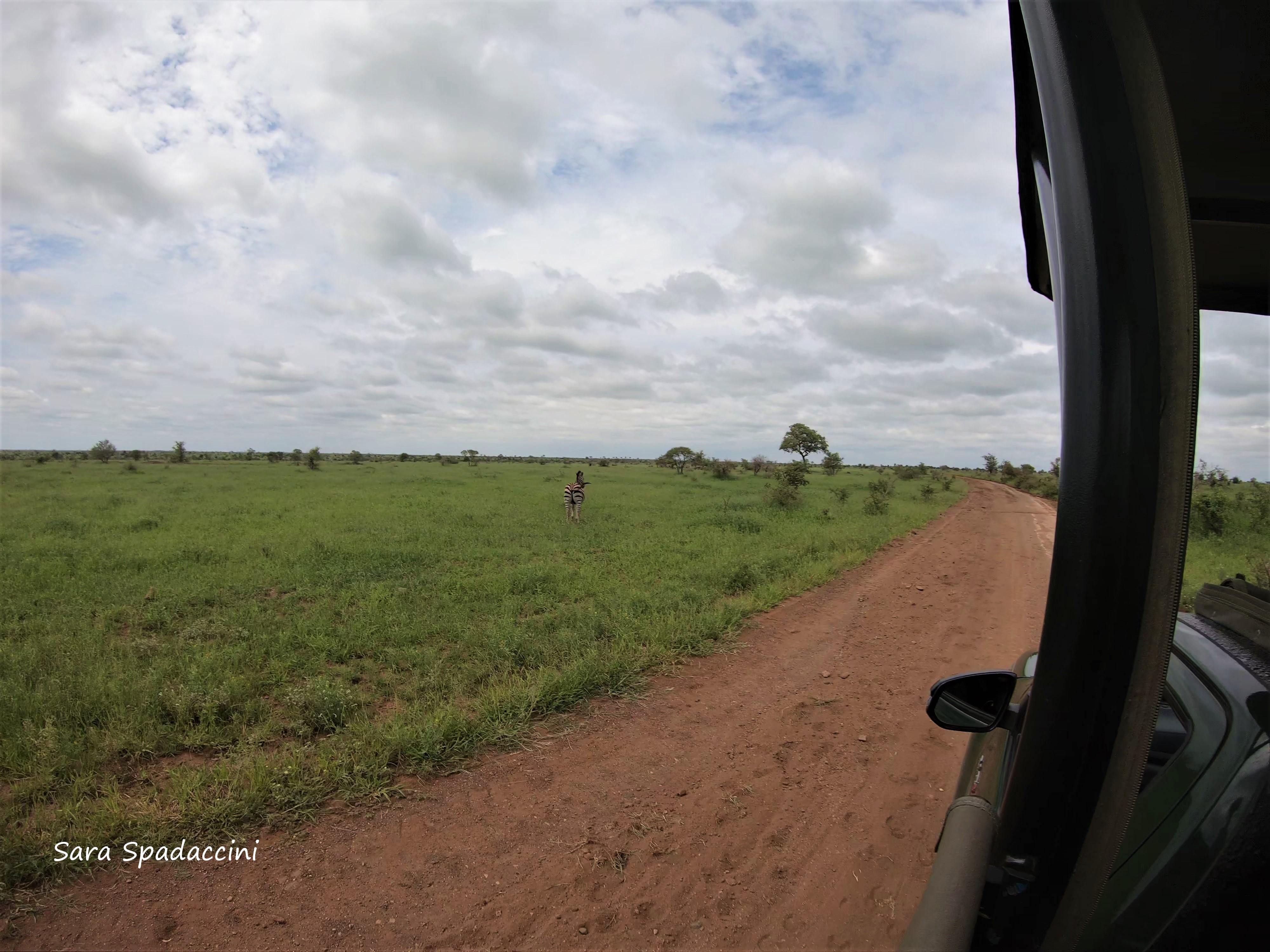Kruger Park (40)