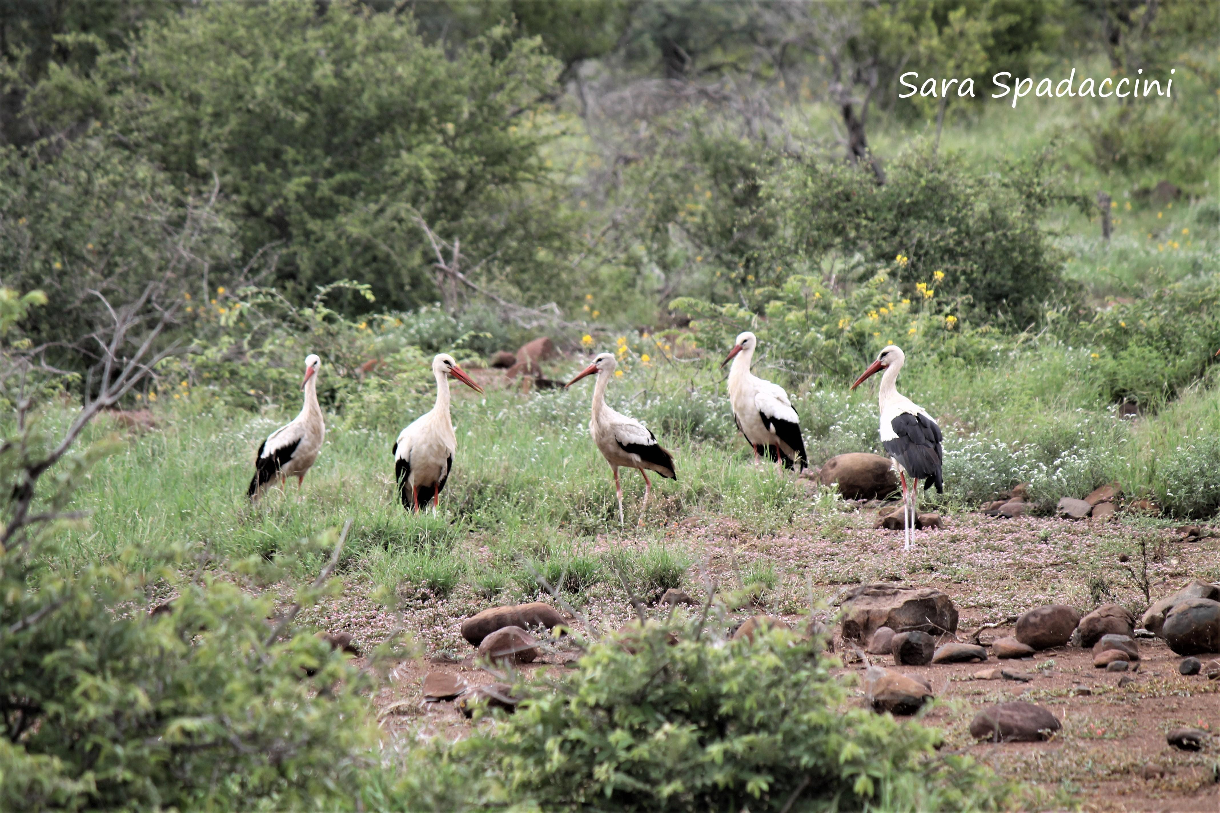 Kruger Park (8)