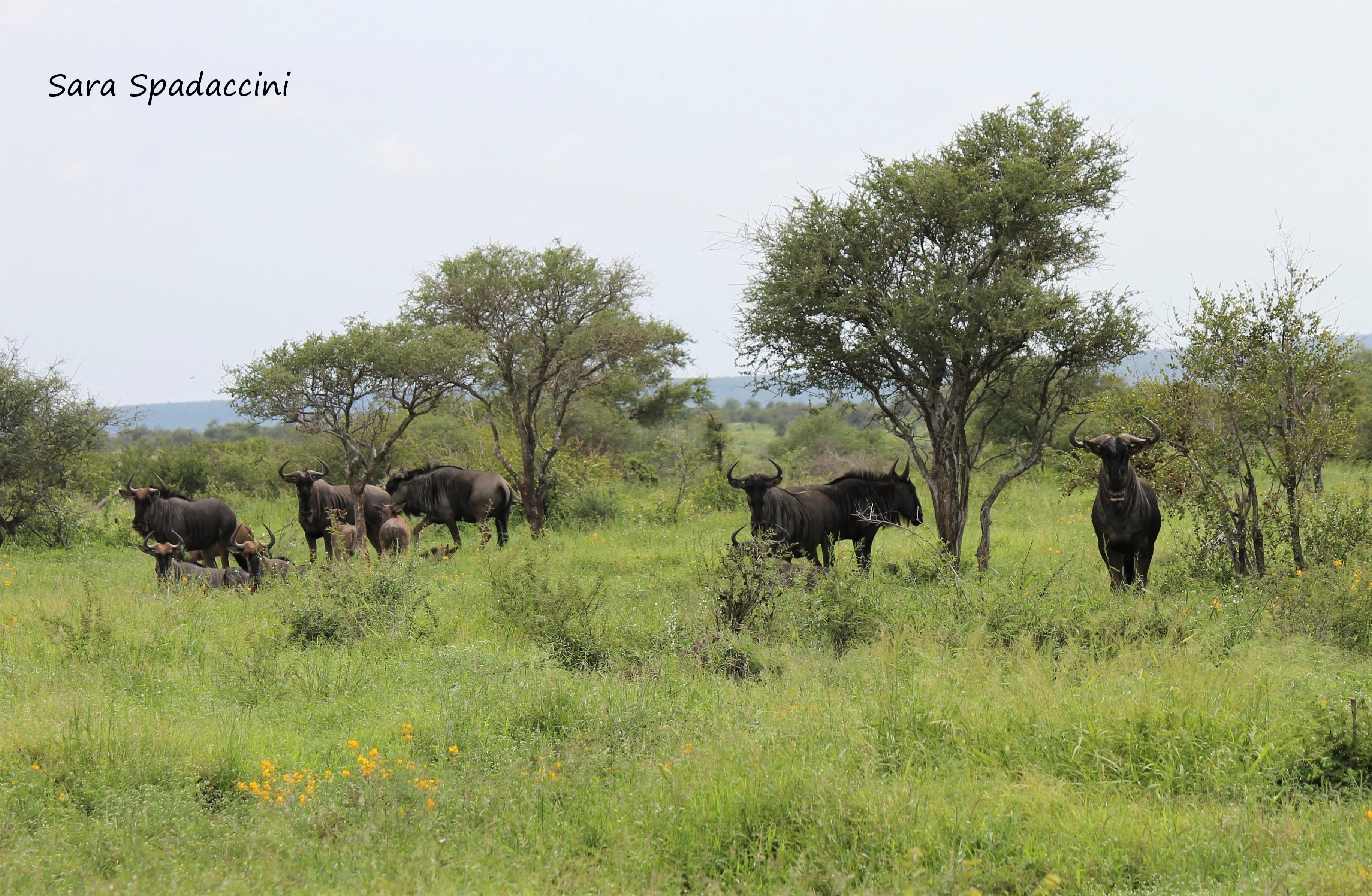 Kruger Park (9)