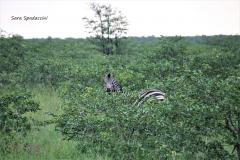 Kruger Park (1)