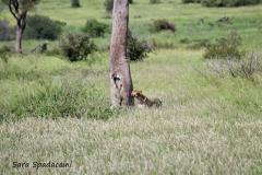 Kruger Park (10)