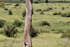 Kruger Park (11)