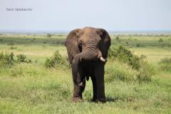 Kruger Park (14)