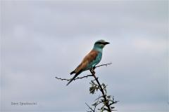 Kruger Park (15)