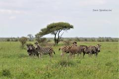 Kruger Park (16)