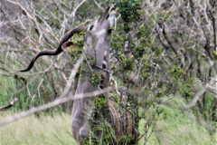 Kruger Park (18)