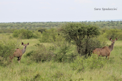 Kruger Park (20)