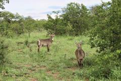 Kruger Park (25)
