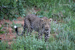 Kruger Park (27)