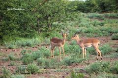 Kruger Park (3)