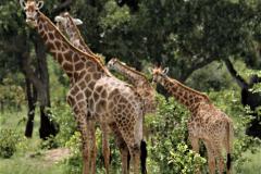 Kruger Park (32)