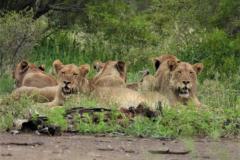 Kruger Park (37)