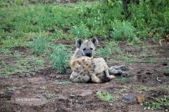 Kruger Park (5)