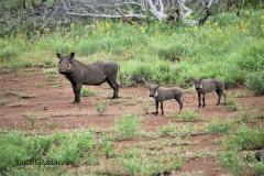 Kruger Park (7)
