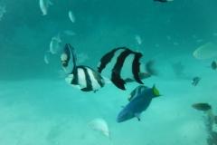 Maldive12