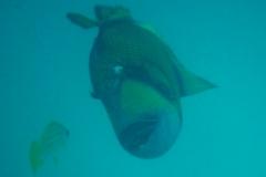 Maldive22