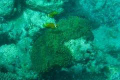 Maldive23