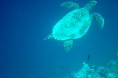 Maldive28
