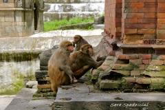 Nepal Travelgallery Sara Spadaccini (36) (800x533)