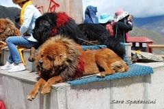 Tibet Sara 2017 (18)