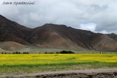 Tibet Sara 2017 (30)