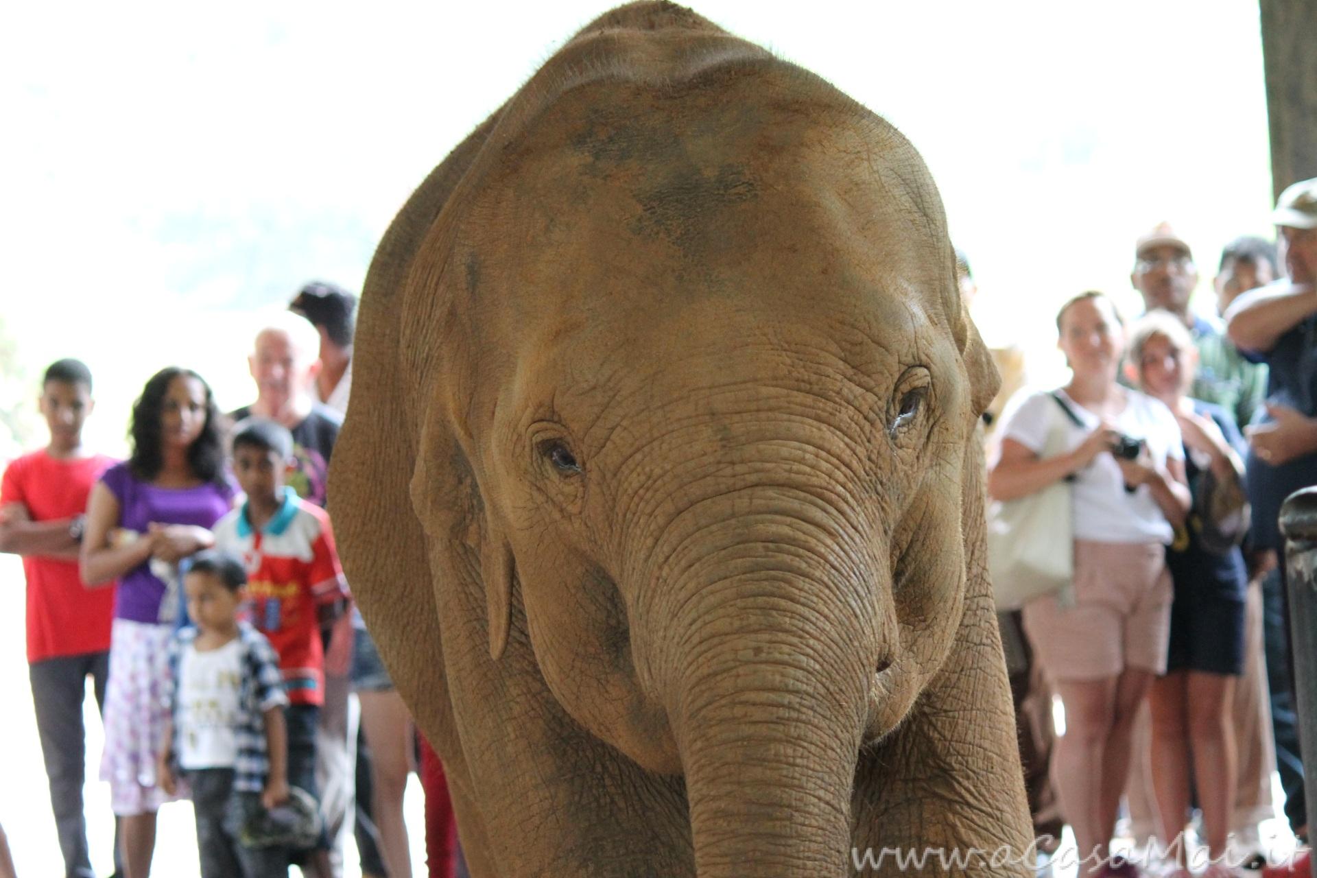 il piccolo elefantino