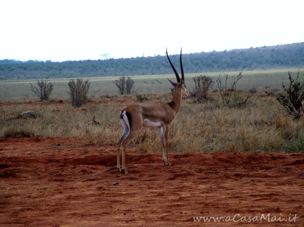 Kenya: secondo giorno di safari