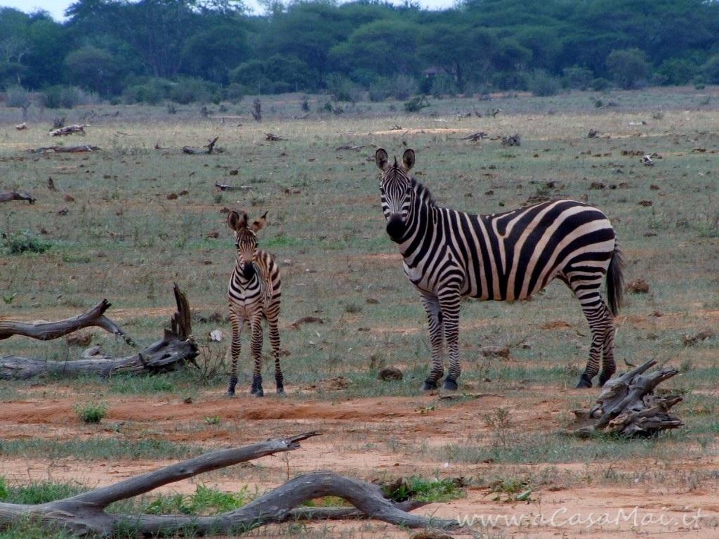 Kenya: primo giorno di safari