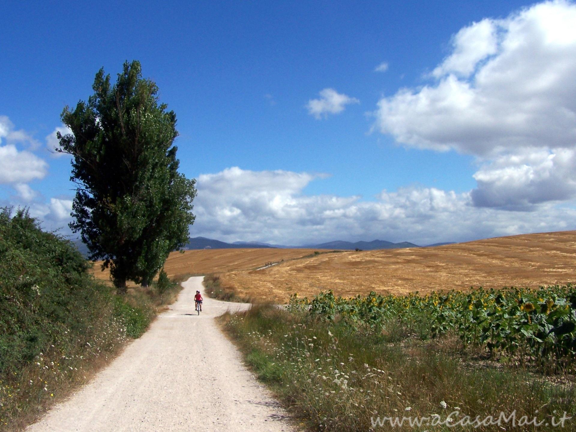 Sentiero del Cammino di Santiago