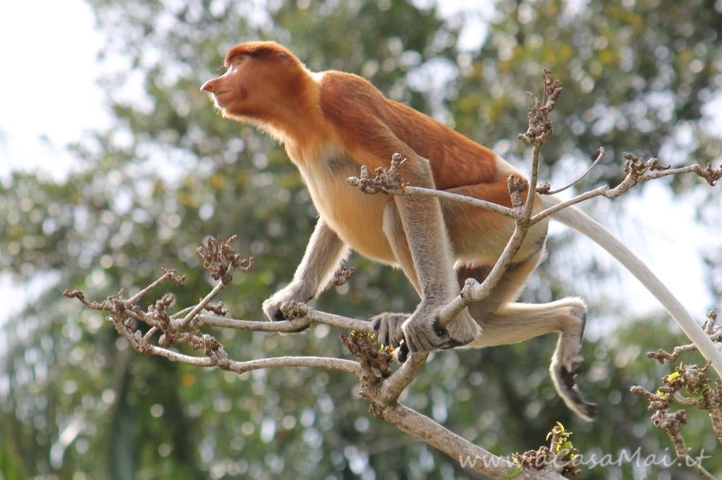 Bako National Park, foresta pluviale sul mare nel Borneo Malese