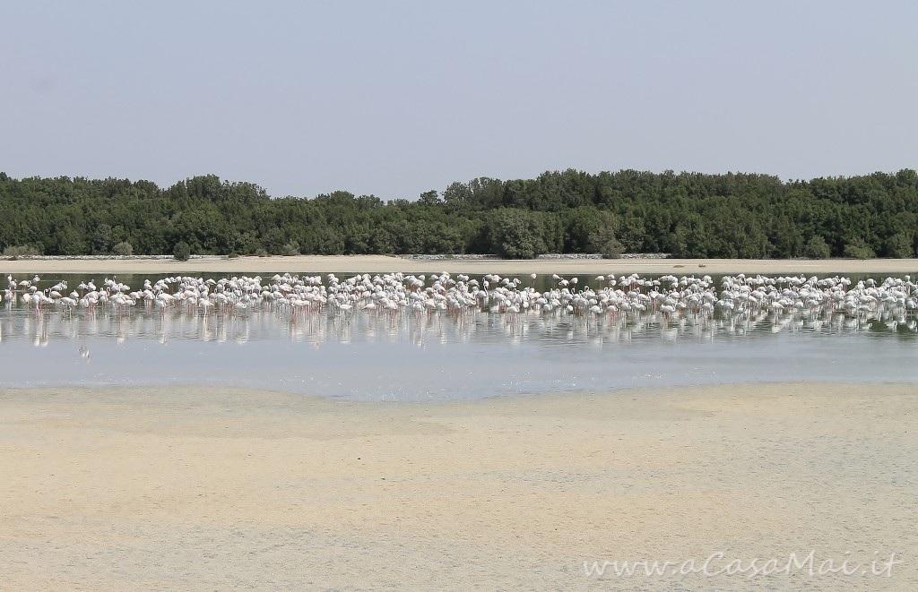 Ras Al Khor: birdwatching nel bel mezzo di Dubai