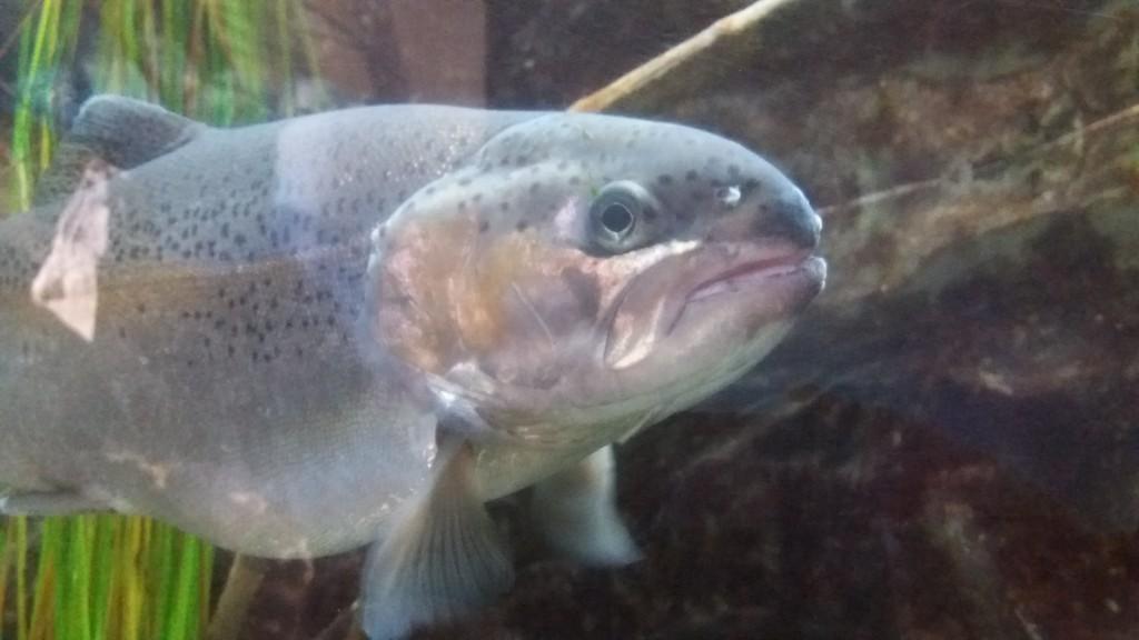 L'interessante acquario di Ariis di Rivignano, vicino a Udine