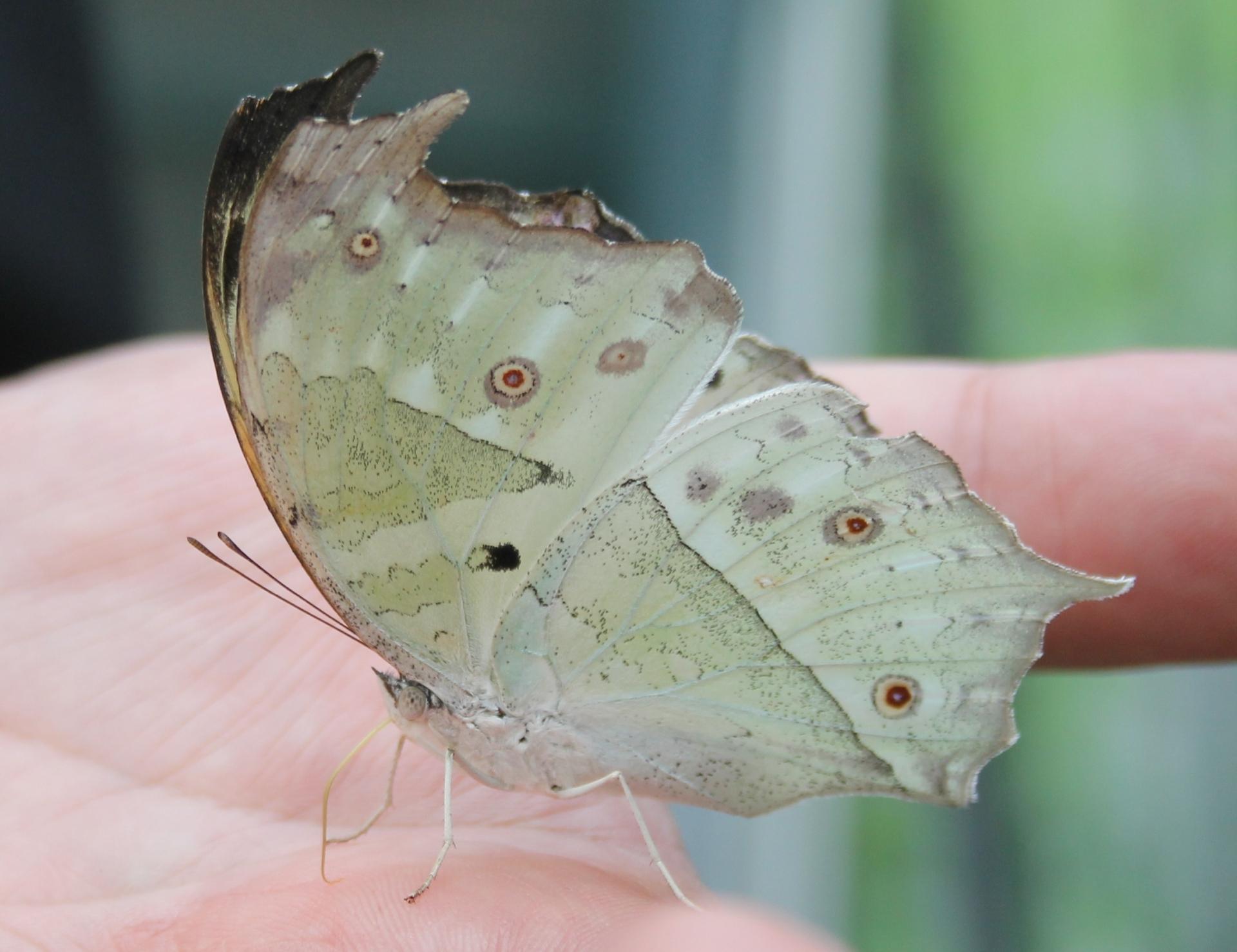 Casa delle farfalle di Bordano, Friuli Venezia Giulia