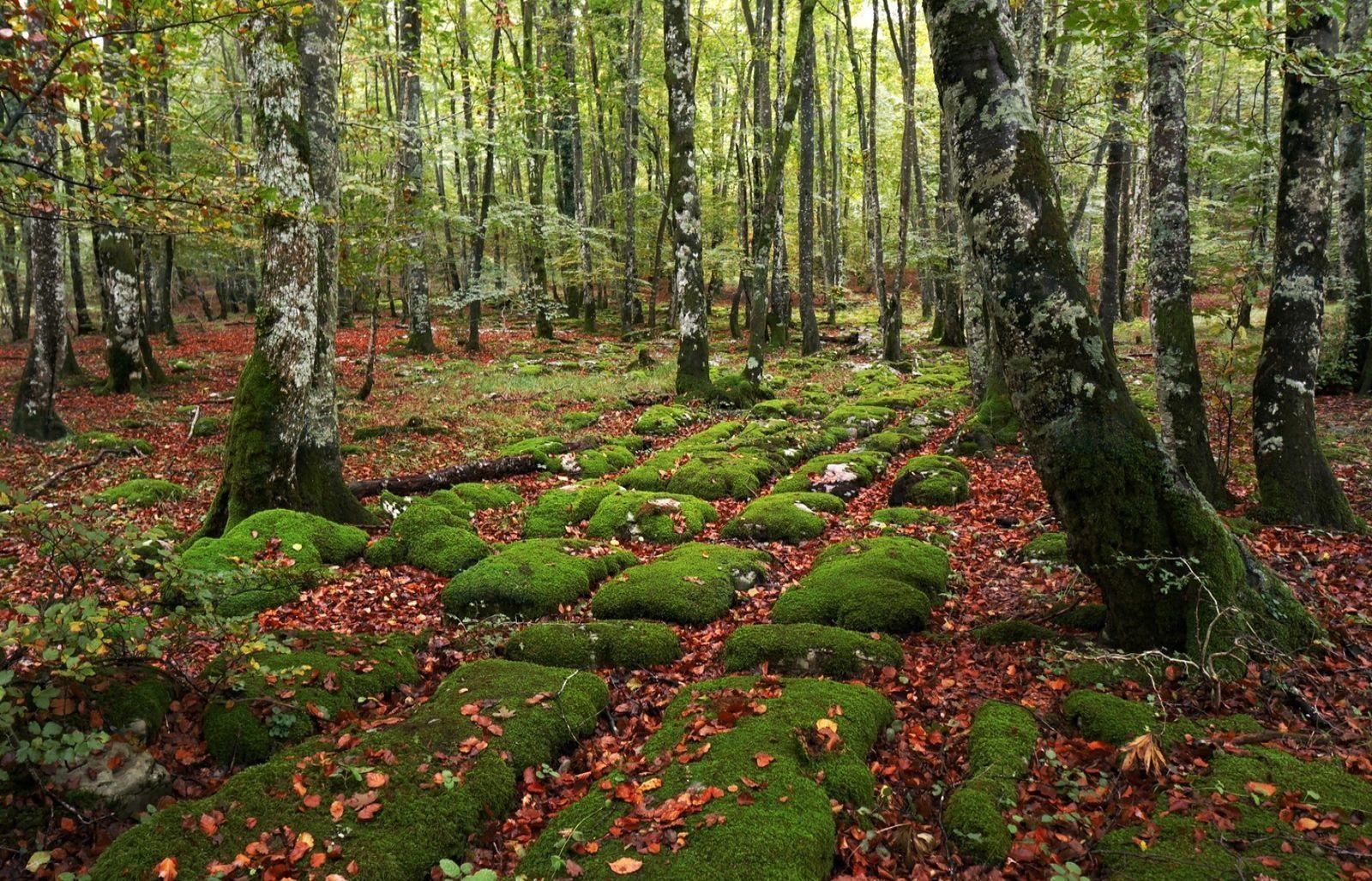 Montes de Oca, Spagna