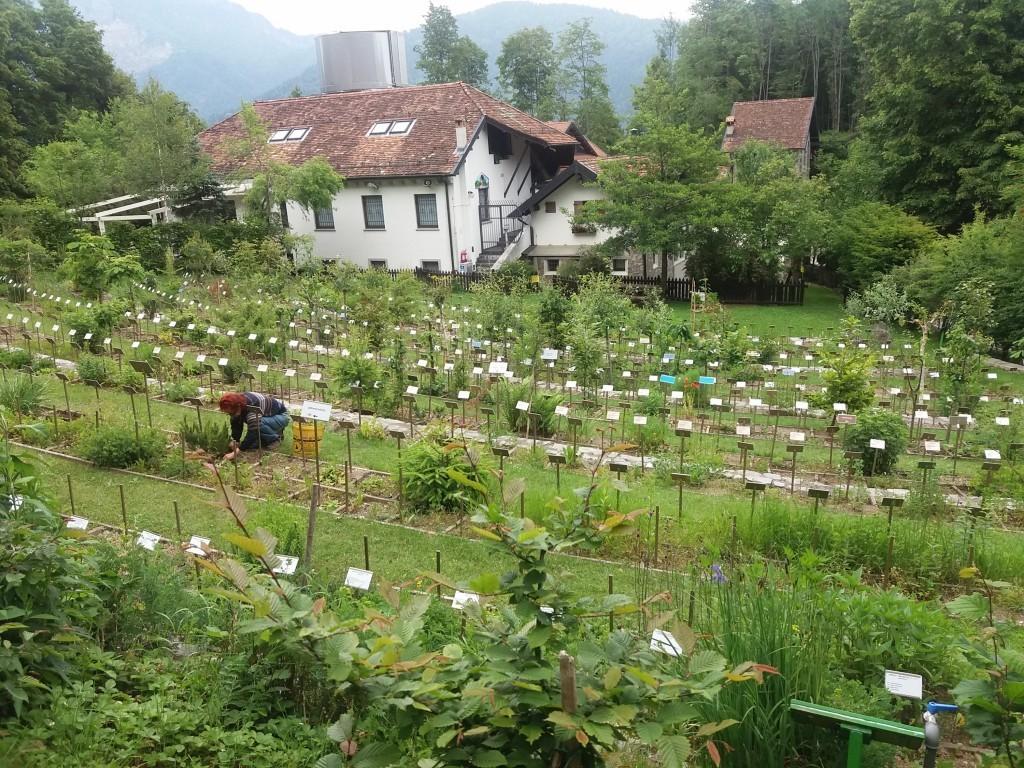"""L'interessante orto botanico """"Il giardino dei semplici"""" di Zuglio (Udine)"""
